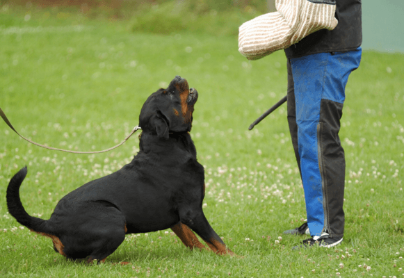 HOW TO TRAIN YOUR DOG FRENCH RING SPORT - what is mondio ring - what is belgian ring (3)