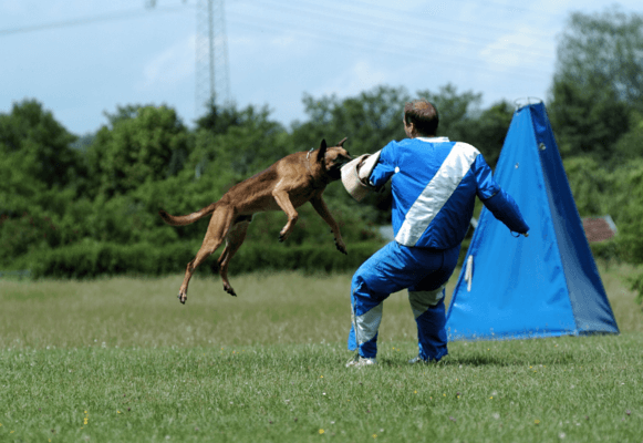HOW TO TRAIN YOUR DOG FRENCH RING SPORT - what is mondio ring - what is belgian ring (5)