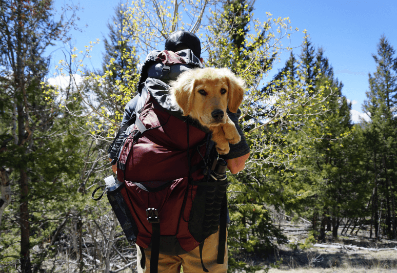 backpacking with dogs - camping with dogs (2)
