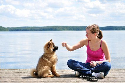 dog best friend , first dog training world of dog ownership first dog
