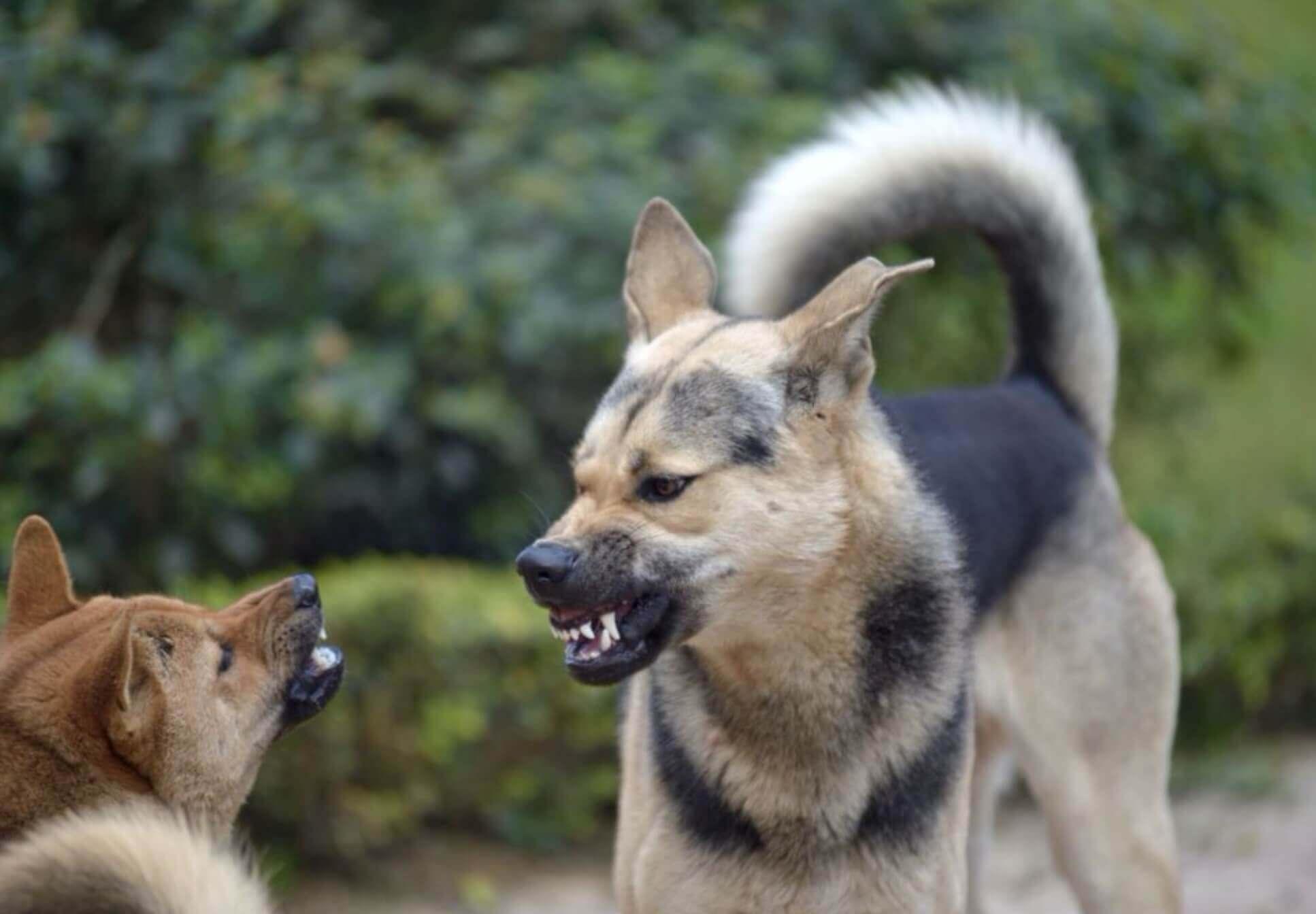 il linguaggio del cane in situazione di stress- comunicazione dei cani