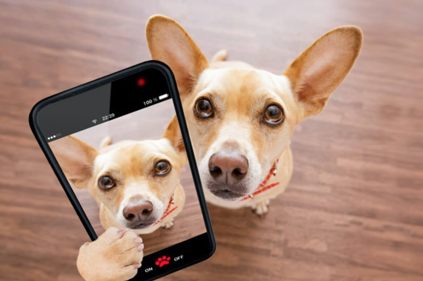 sweet dog shooting a selfie with an iphone