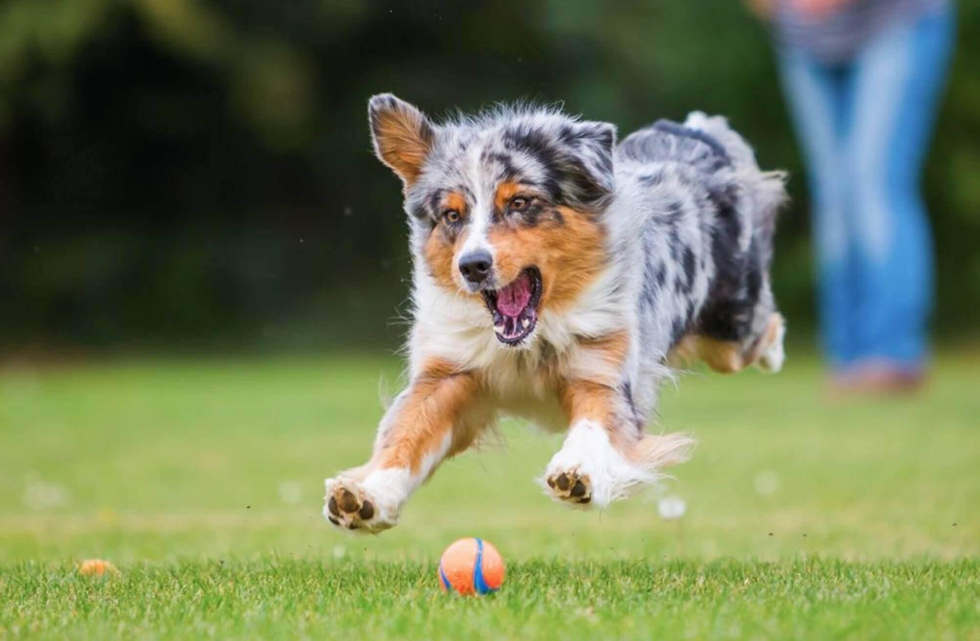 prendersi cura di un cane esercizio fisico e gioco