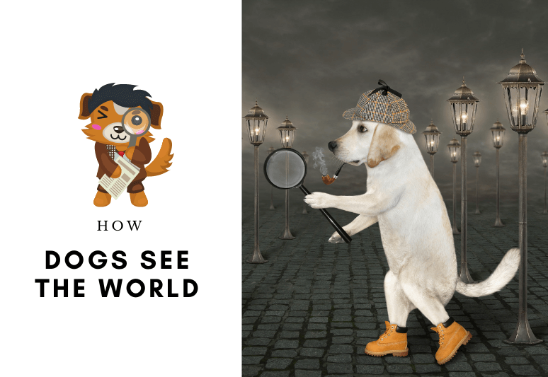 How dogs see the world - dog vision - how a dog see the colors