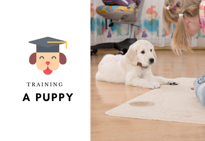 Training a puppy - how to train a puppy (2)