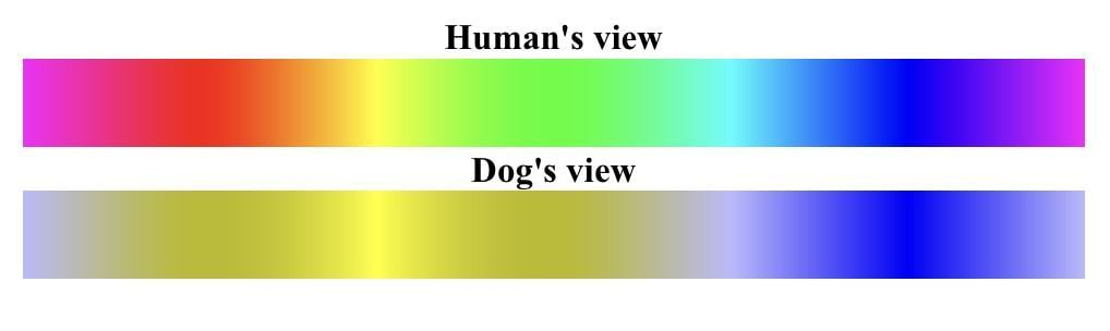 dog vision How dogs see colors 3