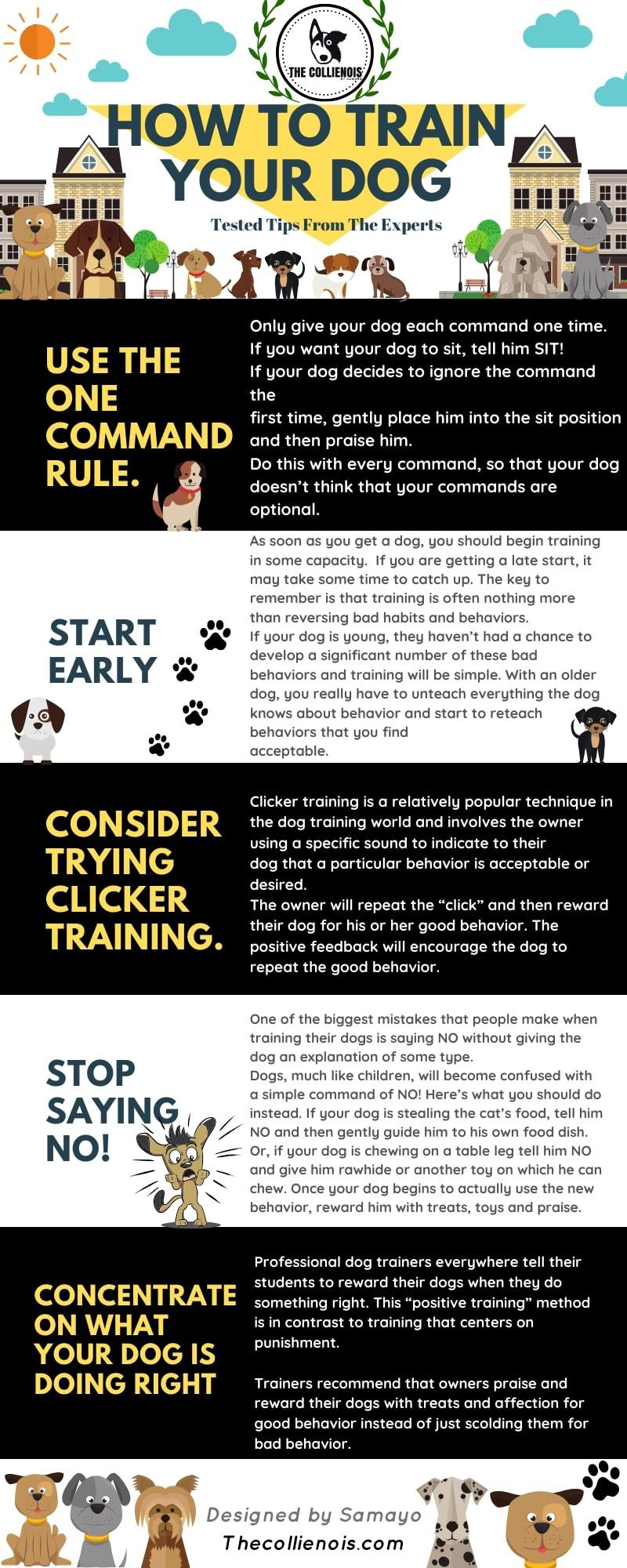 50 Best Dog Training Tips [INFOGRAPHIC] 2