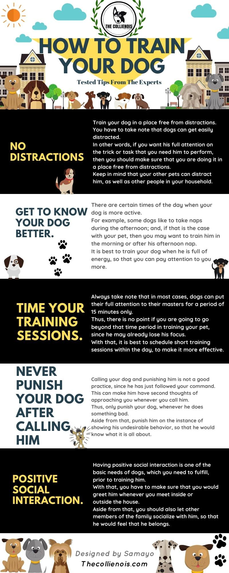 best Dog training tips infographic