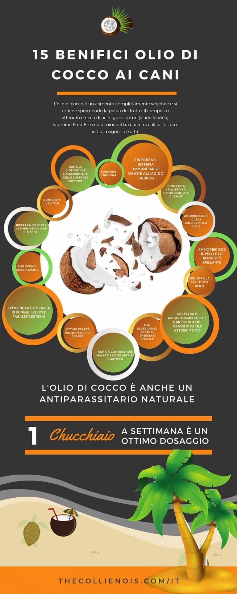 Infografica - Si può dare Olio di cocco ai cani - benefici - proprietà benefiche - uso