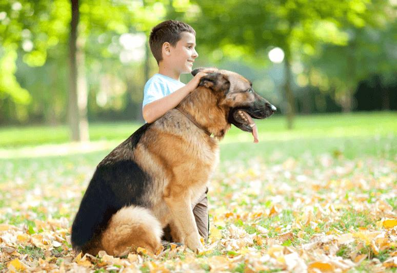 La guida sul cane da pastore tedesco 3