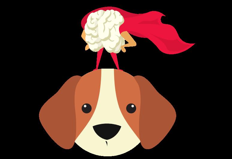 Come Stimolare Mentalmente Un Cane - Attivazione Mentale Del Cane (1)