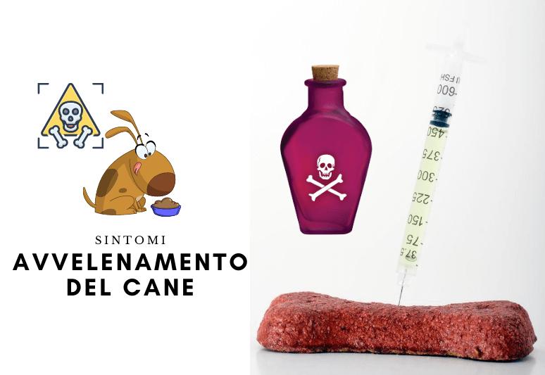 Sintomi Avvelenamento Del Cane - Come Capire se il Cane è Stato Avvelenato