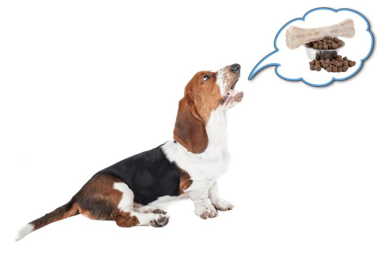 come insegnare al cane a non abbaiare più - come insegnare al cucciolo a non abbaiare più (1)