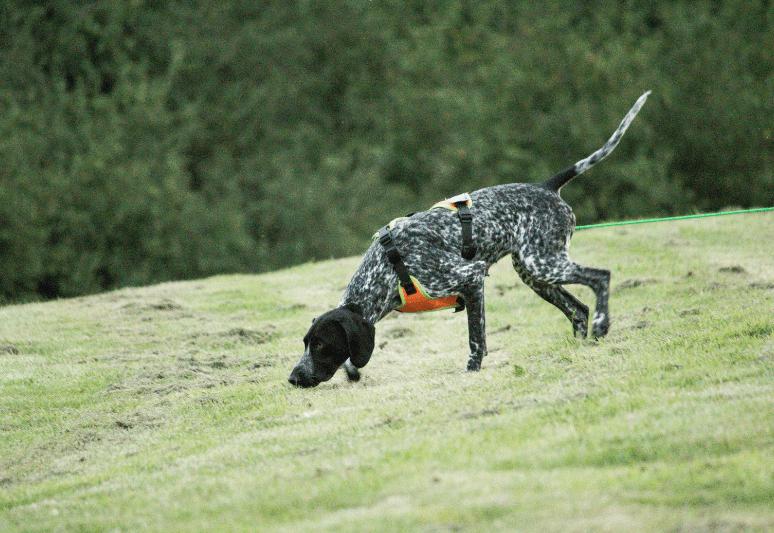 le migliori razze di cani da tartufo - il miglior cane per cercare tartufi - come addestrare un cane a cercare il tartufo