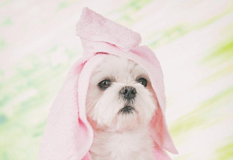 5 BEST DRY SHAMPOOS FOR DOGS - How to wash a dog with a dry shampoo (2)