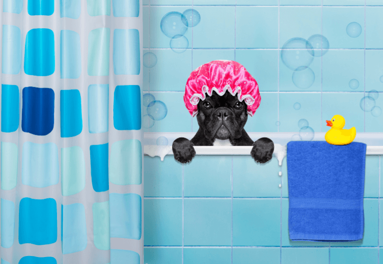 5 BEST DRY SHAMPOOS FOR DOGS - How to wash a dog with a dry shampoo (4)