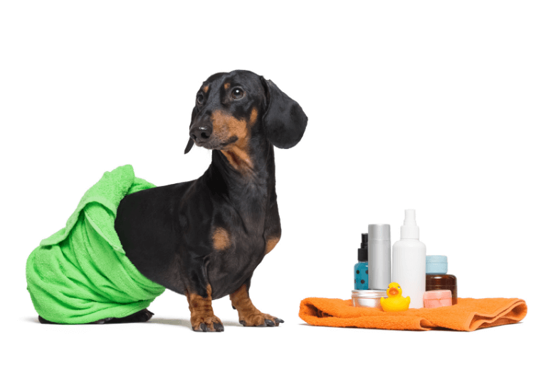 5 BEST DRY SHAMPOOS FOR DOGS - How to wash a dog with a dry shampoo