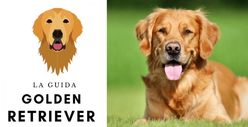 La guida sul cane Golden Retriever