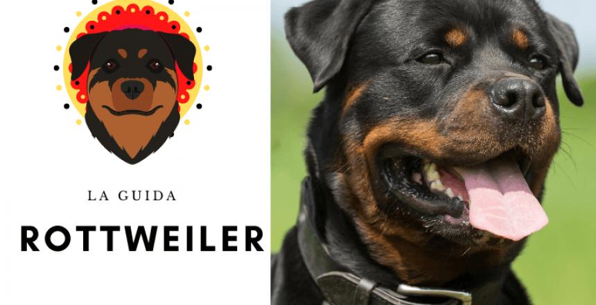 la guida sul cane tedesco rottweiler - Addestramento, Carattere, Cura, Salute & Prezzo (1)