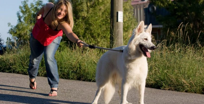 dog pull on the leash the owner